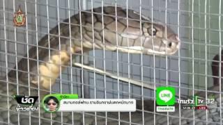 getlinkyoutube.com-สตูล จับงูจงอางและงูเหลือม | 16-06-59 | ชัดข่าวเที่ยง | ThairathTV