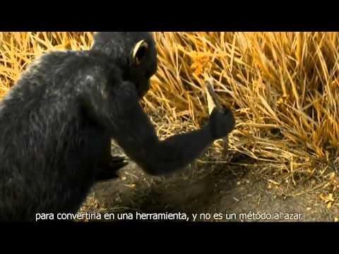 Becoming Humans: Firts Steps (versión en español, subtitulado)