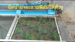 getlinkyoutube.com-ขั้นตอนจุ่มฟิล์มลอยน้ำ(Water Transfer Printing) by H2O Kevlar