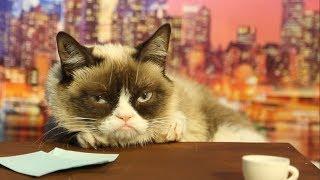 getlinkyoutube.com-Grumpy Cat Auditions to Replace David Letterman | Mashable