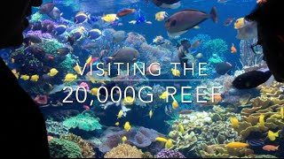getlinkyoutube.com-20,000g Reef - Learn how it is maintained all these years