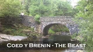 Coed y Brenin - Beast Trail - 2014