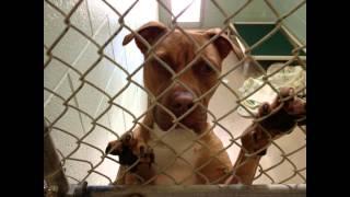 A Shelter Dog's Life