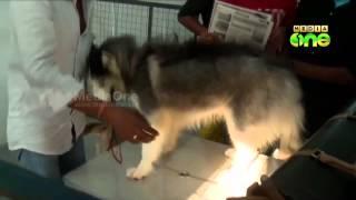 getlinkyoutube.com-Mohanlal's kennels shine in Dog Show