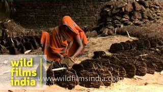Indian villager makes cow dung cakes for use as cooking fuel, Uttar Pradesh