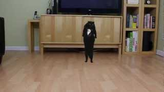 N2 the Talking Cat S3 Ep2 Oppa Gangnam Style Cat Parody