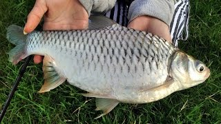getlinkyoutube.com-Carp fishing ตกปลาเกล็ด แบบสปิ๋ว by เมย์มี่