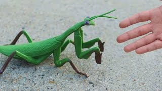 getlinkyoutube.com-GIGANTIC PRAYING MANTIS!
