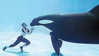 Expert Whale Trainers Attacked In BLACKFISH