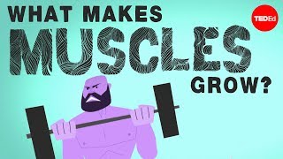 getlinkyoutube.com-What makes muscles grow? - Jeffrey Siegel