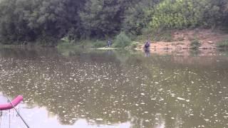 рыбалка на пахре 2016 видео