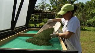 getlinkyoutube.com-Pimienta del Bosque Lluvioso - Casa Vieja Costa Rica