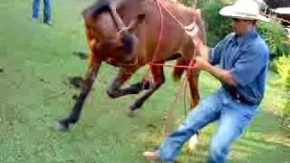 getlinkyoutube.com-Enssinando minha égua deitar