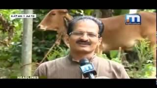 getlinkyoutube.com-ജൈവ കൃഷിയിൽ നാടൻ പശുക്കളുടെ  പങ്ക്        Zero budget bio farming