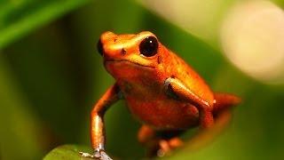 getlinkyoutube.com-Tropen Regenwald Pfeilgiftfroschterrarium, selber bauen, einrichten, Vorstellung!