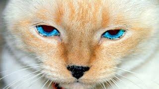 getlinkyoutube.com-10 Trucos Para Gatos o Life Hacks - Experimentos Caseros - LlegaExperimentos