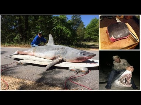 Land based Shark Fishing Record: Man catches and eat 11ft MAKO SHARK weighing 805 POUNDS in Florida