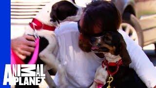 getlinkyoutube.com-Reuniting a War Veteran with His Beloved Dogs