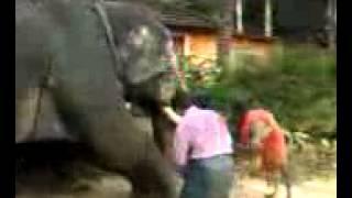 getlinkyoutube.com-kerala funny elephant attack - very funny
