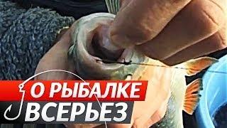 """getlinkyoutube.com-Ловля хищной рыбы на Живца поздней осенью. """"О Рыбалке Всерьез"""" видео 142."""
