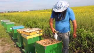 getlinkyoutube.com-La extras de miere de rapita,10 05 2015