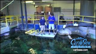getlinkyoutube.com-Fish Farms, sharks, discus, cichlids, penguins and more. Blue Zoo TV in 8 mins.