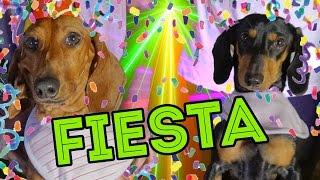 getlinkyoutube.com-CUMPLI 4 AÑITOS!! | LOS POLINESIOS VLOGS