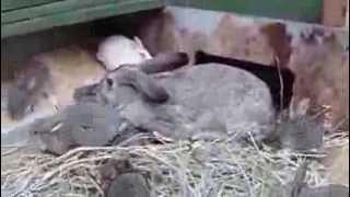 """getlinkyoutube.com-""""Закрыл"""" гнёзда в норе. Клетка для кроликов """"Искусственная нора - вольера"""""""