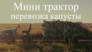 getlinkyoutube.com-Мини трактор ( перевозка капусты)