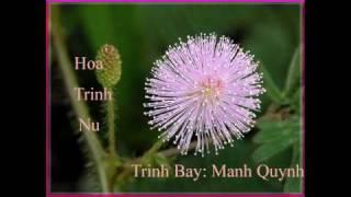 getlinkyoutube.com-Hoa Trinh Nu - Trình bày: Mạnh Quỳnh