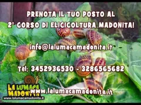 2° CORSO DI ELICICOLTURA MADONITA! 15 SETTEMBRE 2012 - ALLEVAMENTO DI LUMACHE -