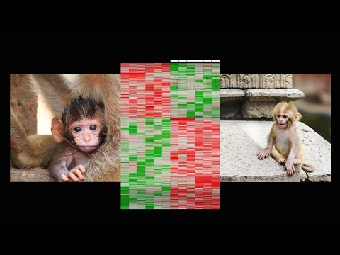 How early life experience is written into DNA | Moshe Szyf
