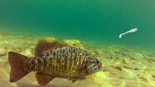 getlinkyoutube.com-Sight Fishing Smallmouth Bass