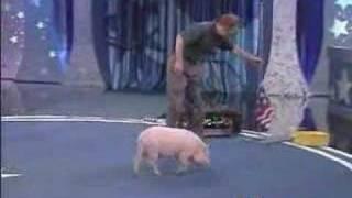 getlinkyoutube.com-Quem eh mais inteligente, o cão ou o porco???