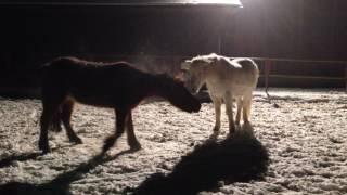 11.01.2017 - Drei Ponys und ein bisschen Schnee