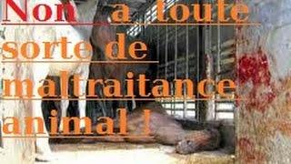 getlinkyoutube.com-non a la maltraitance animal !(vieille vidéo ) Passage choquant attention