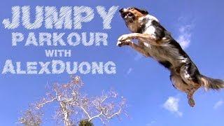 getlinkyoutube.com-Alex & Jumpy - The Parkour Dog