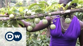 Ugandan women empowered by passion fruit | DW News