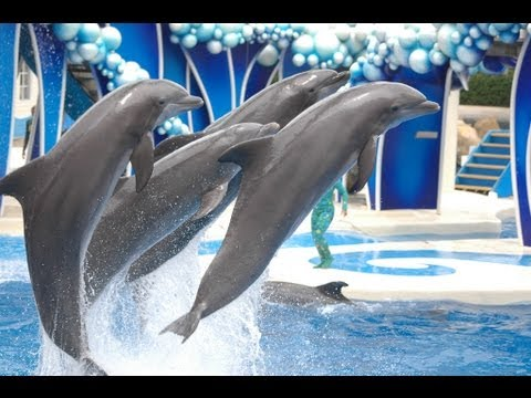 ♥♥ Seaworld's blue Horizons Dolphin Show in Hd