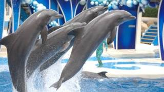 "The Complete 2016 SeaWorld ""Blue Horizons"" Dolphin Show"