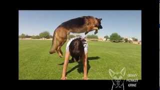 getlinkyoutube.com-Kaine's Amazing Dog Tricks 2012 Remix
