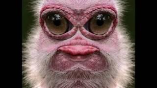 getlinkyoutube.com-Animais mais feios do mundo (extra bizarros)