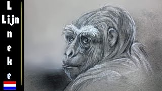 getlinkyoutube.com-Hoe teken je een Gorilla met houtskool en wit pastel
