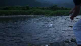 getlinkyoutube.com-ナンですかこれ!?大きな川魚をルアーで釣りました!