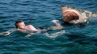 getlinkyoutube.com-Top 10 - Compilation d'Attaques de Requin