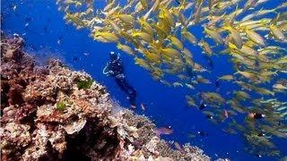 getlinkyoutube.com-Australia's Great Barrier Reef   beautiful underwater nature   Scuba Diving the Ribbon Reefs HD