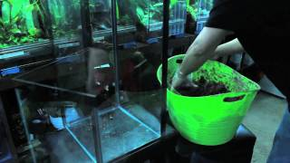 getlinkyoutube.com-Building a vertical tank for arboreal dart frogs