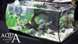 getlinkyoutube.com-Aquascaping Lab - Tutorial Realistic Natural setting tank tree forest (size 80 x 40 x 40h 130 L)