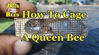 getlinkyoutube.com-Caging A Queen Bee