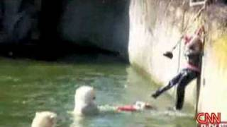 Polar Bear mauling woman @ German Zoo in Berlin - Polar Bear Zoo Berlin